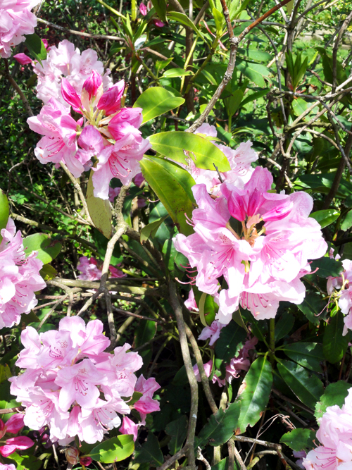 Pink flowers 02